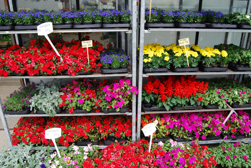 Planten tuincentrum